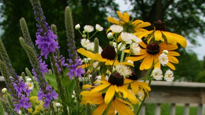 blessed-dyslexia-special needs-flowers-adoption-teach.jpg  //Namafish.com